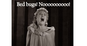 Does Your Building Have Bed Bugs?