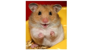 What Do Vinegar and Hamsters Have in Common?